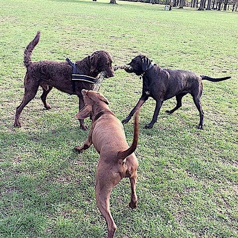 Hundebetreuung in der Gruppe