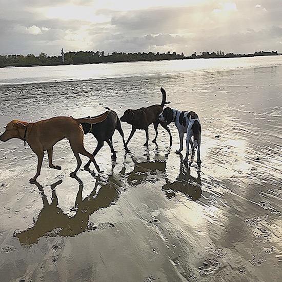 Pfoten-Freizeit - Am Strand toben